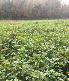 Food Plot & Land Management